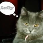 Imagen de perfil de Lully